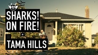 Download Sharks On Fire - Tama Hills Official Music MP3 song and Music Video