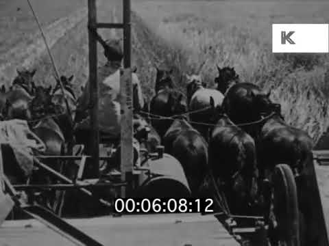 1920s, 1930s Argentina Farming, Alfalfa, Linseed, Wheat