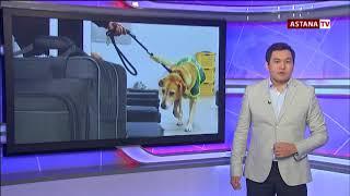 Служебные собаки ищут наркотики и взрывчатку ради игрушки, - кинологи