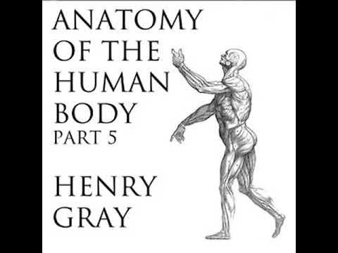 Anatomy Of The Human Body Part 5 Grays Anatomy By Henry Gray