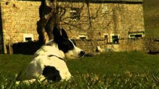 Meet Our Lamb Supplier - Tenley Farm, Yorkshire