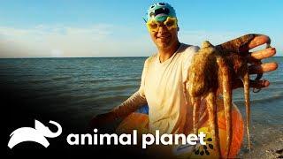 Animais que você pode encontrar debaixo d'água | Perdido no México | Animal Planet Brasil