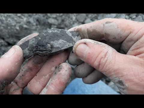Penn Dixie Buffalo NY, Fossil/Trilobite Hunting