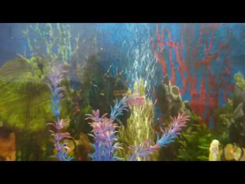 Вопрос: Как почистить аквариумное стекло?