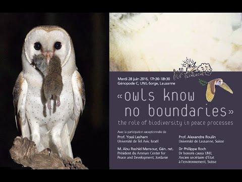 Owls know no boundaries