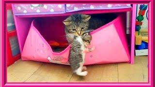 🐱Новый домик для котят. Кошка перетаскивает котят в ящик для игрушек:)