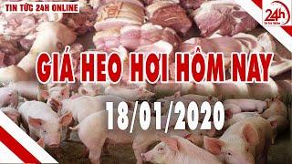 Giá heo hơi ngày hôm nay 18/1/2020 | Giá lợn hơi tiếp tục tăng cả 3 miền | Tin tức 24h