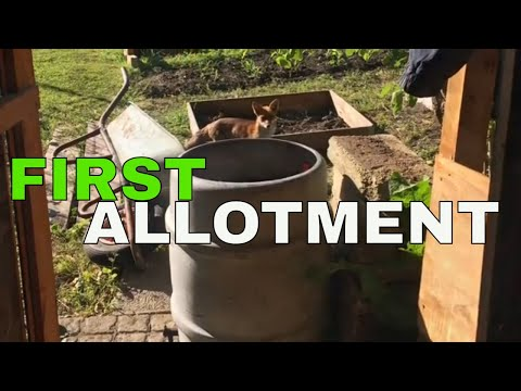 first-allotment-plot-and-harvest-/-april-to-october-2018
