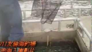 12月11日友倫海釣場 大赤海入庫影片