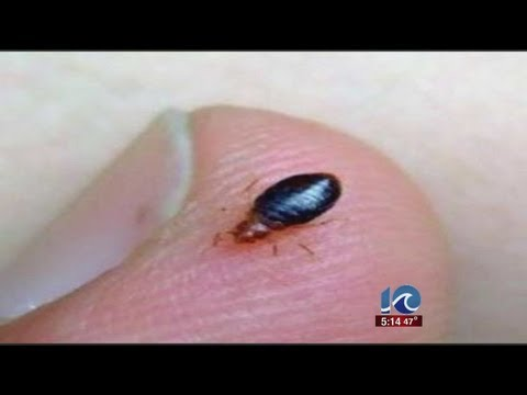 WAVY News 10's Stephanie Harris reports on the Churchland H.S. bed bug situation Travel Video