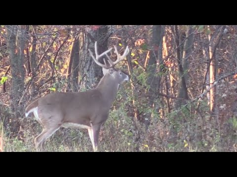 Don't Buy Into The Deer Hunting Land Management Hype