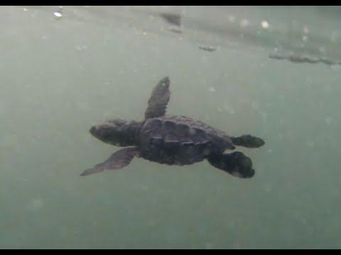 Bali Sea Turtle Sanctuary on Kuta Beach