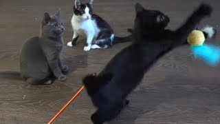 Kittens are still playing