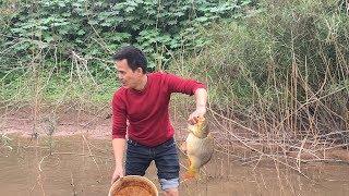 Kích cá chép khủng, chuối khủng ở bãi sậy ven sông