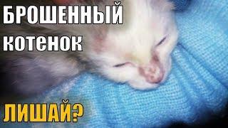 Лишай у кота? Авитаминоз у кошек? Аллергия у кошек? Клещ или дерматит?