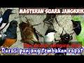 Ngocehae Masteran Suara Jangkrik Rapat Durasi Panjang Cocok Buat Masteran Murai Batu Dll  Mp3 - Mp4 Download