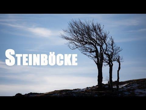 Steinböcke fotografieren mit dem Tamron 100-400 Objektiv - Video Blog