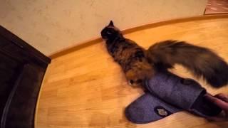 Наша кошка зажигает во время течки!)(Наша кошка зажигает во время течки!), 2015-07-06T21:15:39.000Z)