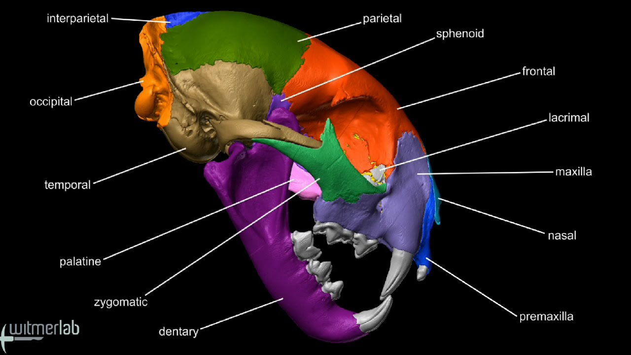 anatomy skull diagram labeled [ 1280 x 720 Pixel ]