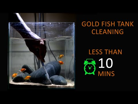 #49 Fish Tank Cleaning - Gold Fish