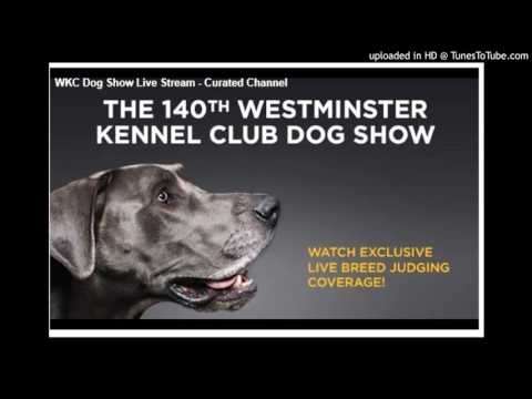 Westminster Kennel Club Dog Show 2016 (Watch Live Stream)