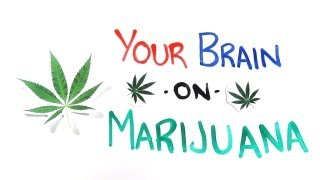 Your Brain on Drugs Marijuana