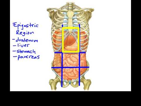 1.5e Anatomical Terminology_ Abdominopelvic regions and quadrants