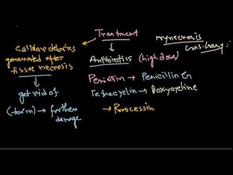 Clostridium Perfringens Treatment Youtube