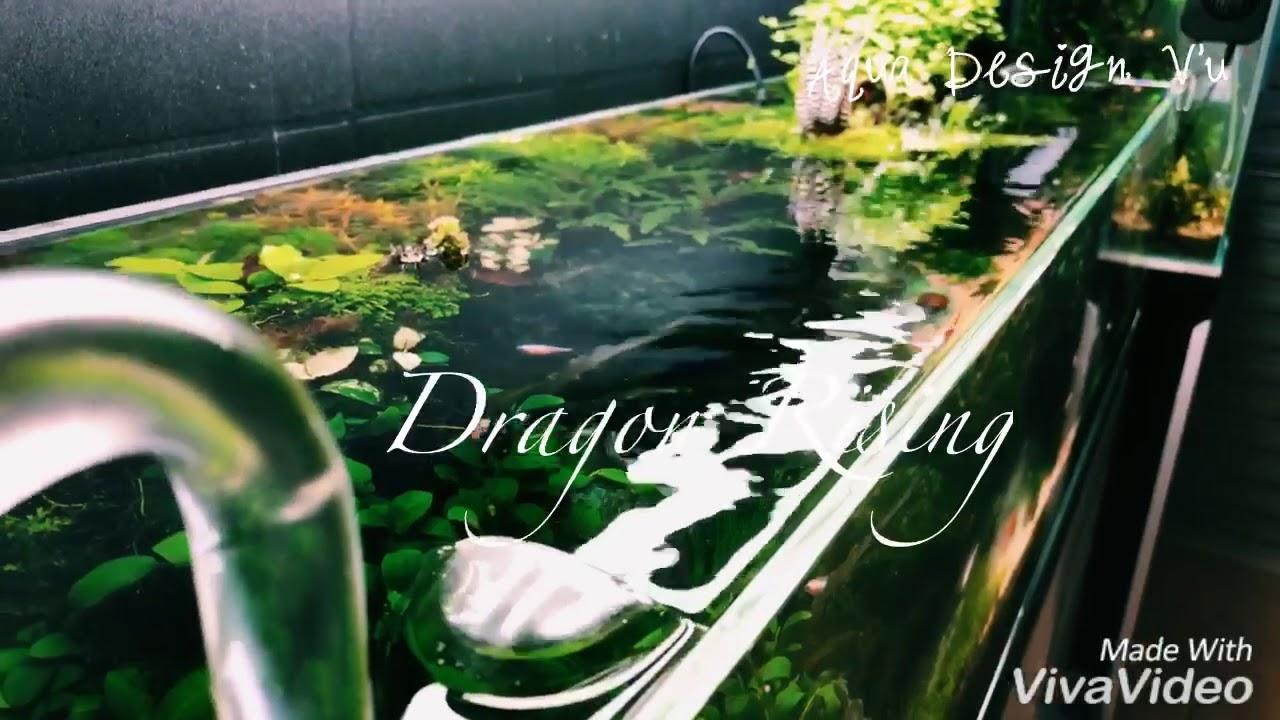 Nature aquascape 120p tanks - YouTube