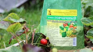 Обработка почвы осенью Горчичный жмых – чистит и улучшает почву