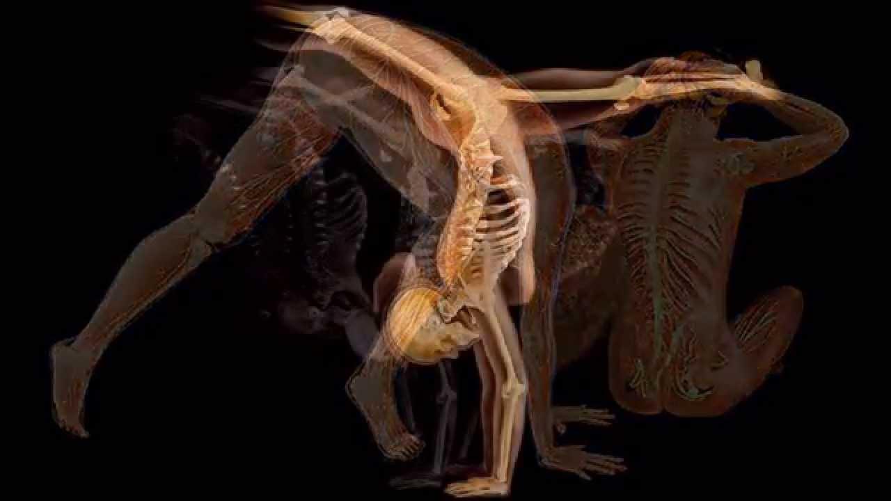 El cuerpo humano - YouTube