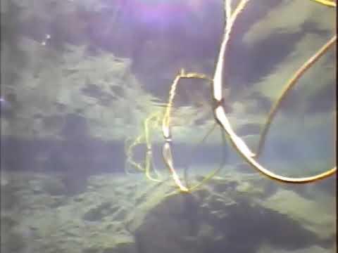 Build Your Own Undersea Robot - IEEE Spectrum