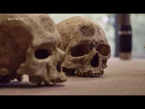 National Geographic   notre intelligence dévoilée - Documentaire 2016 - Documentaire Franc
