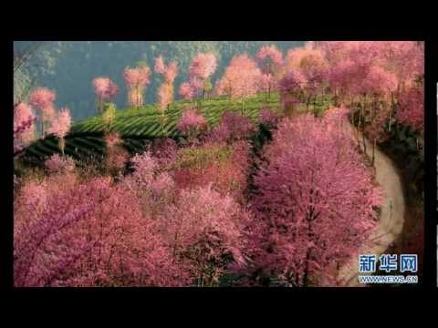 Peng Liyuan 彭丽媛 - 在那桃花盛开的地方 Where the Peach Bloosoms are in Full Bloom