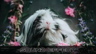 Animals   Pig Some Shrill 11 SFX Producer   No Copyright Animals Sounds