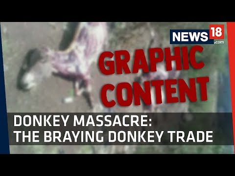 No Mercy | Donkeys Stolen, Skinned in Africa to Feed Chinese Demand