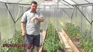 Первый уход за томатами после высадки(Первый уход за томатами после высадки Мой сайт: http://svoitomaty.ru/ Эмайл адрес для связи: tomatoved@mail.ru., 2014-06-03T08:38:19.000Z)