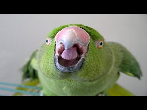Анекдоты Приколы на XA XAORG Тысячи фото, картинки