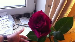 Проводим Эксперимент на розах Неделя. Компания