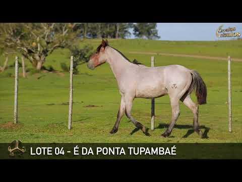 LOTE 04   É DA PONTA TUPAMBAÉ