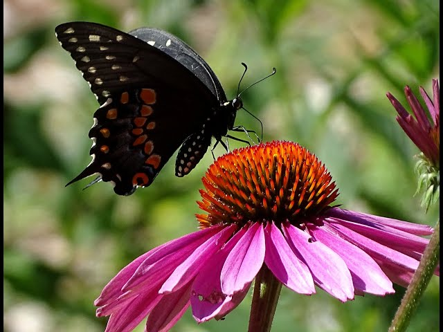 Belle Isle Nature Center | Quick Tips for Pollinators: Plant a Rainbow