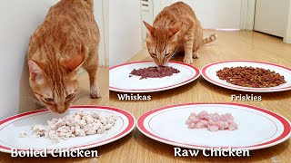 Raw or Boiled Chicken +Wet or Dry Food|Cats and Kittens Choosing Food?| Which will the Cats Choose?