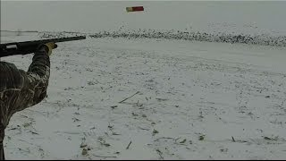 Kansas Snow Goose Hunt 2014 - Cow Decoy Field Jump
