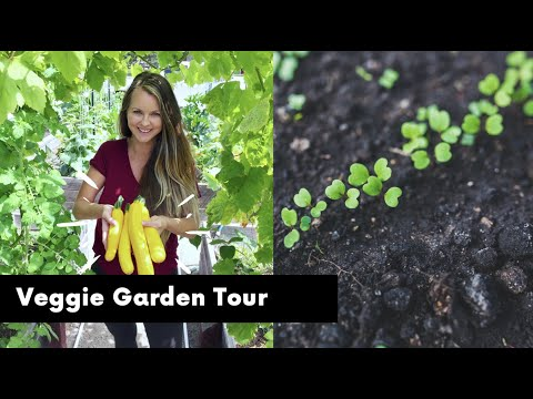 zone-9b-california-home-vegetable-and-fruit-garden-tour-|-full-tour-of-front-and-backyard-garden