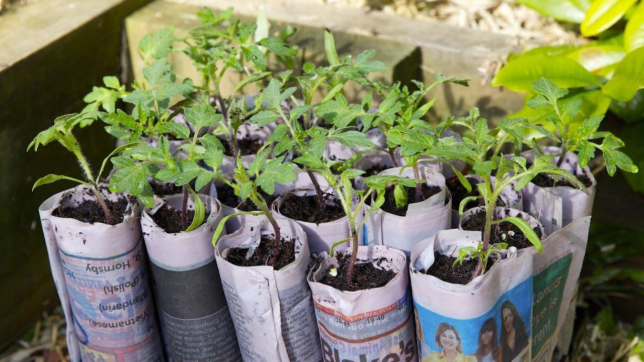 how to make a newspaper seed pot