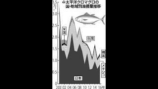 クロマグロ新規制、回復状況に応じ漁獲枠増減へ