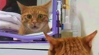 ПРИКОЛЫ С ЖИВОТНЫМИ Смешные Животные Собаки Смешные Коты Приколы с котами Забавные Животные 99