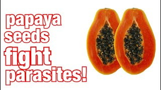 Eat Papaya Seeds For Parasite Cleanse Part 1