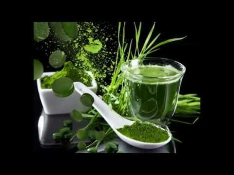 Spirulina Wholesale - Spirulina.DO