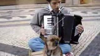 SINGING_DOG